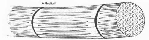 kas lifleri